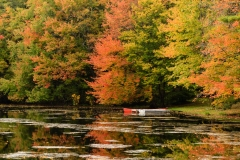 Docked Boats Under Fall Colors