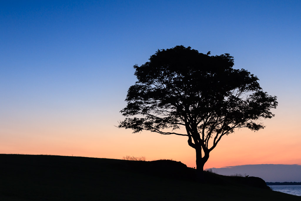 A lone tree is silhouetted against the dawn sky along the Rhode Island coast